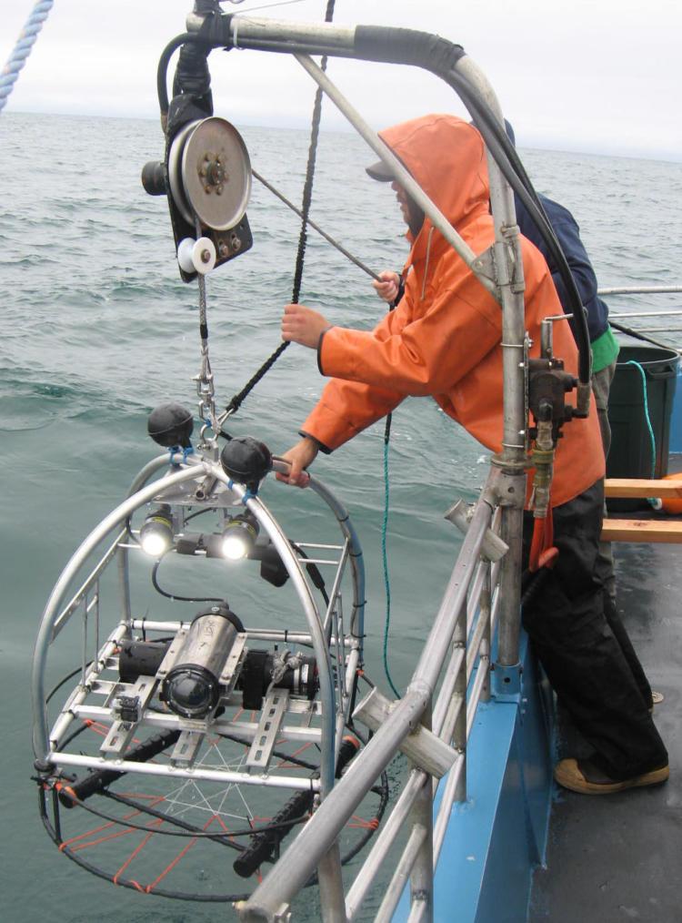 A video lander designed by ODFW  being retrieved after sampling rocky subtidal habitat.