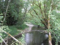 COA_008_Clatskanie River_Herman Biederbeck,ODFW