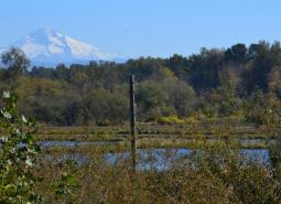Smith-Bybee Lakes and Columbia Slough area