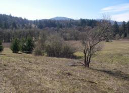Kings Valley Oak Woodlands