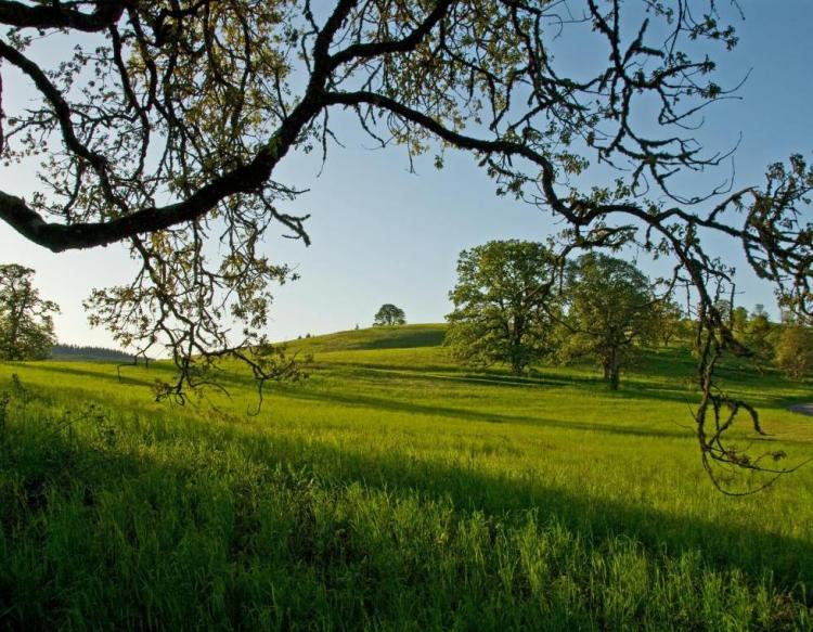 Finley Muddy Creek Area