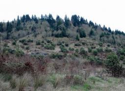 West Eugene area