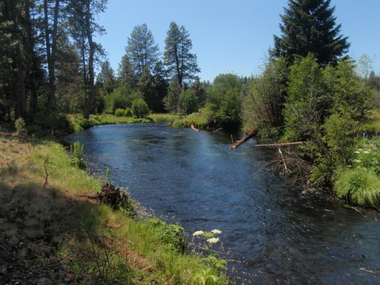 The Metolius River in Oregon's East Cascades Ecoregion.